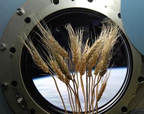 Эксперимент на Земле и в Космосе. Проект по выбранной теме